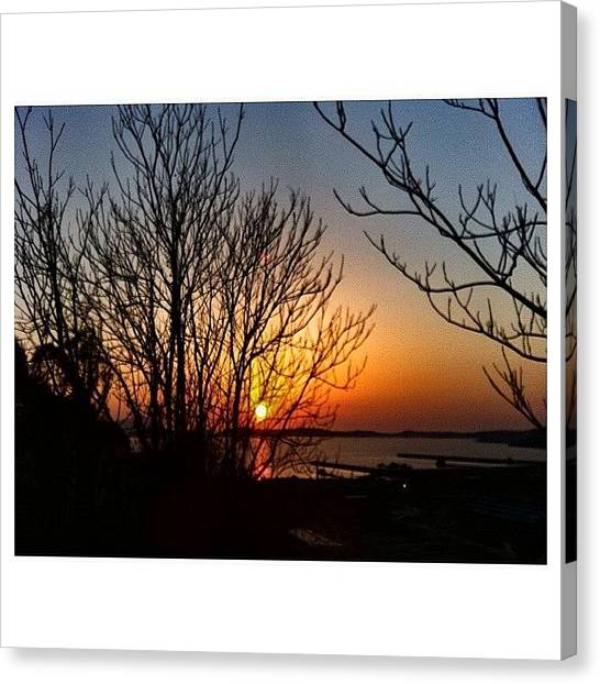 Orange Tree Canvas Print - Tramonto by Maria Esposito