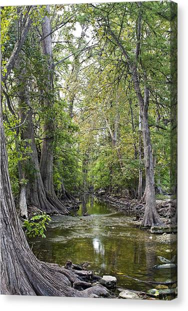 Cibolo Creek - 2 Canvas Print
