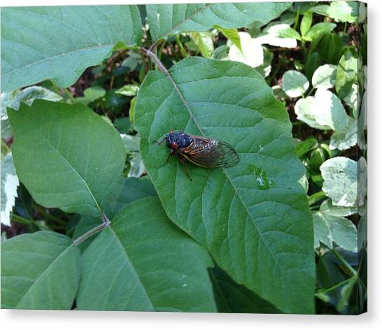 Cicada Invasion Canvas Print