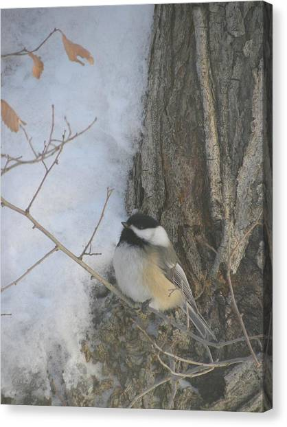 Cickadee And Bark Canvas Print