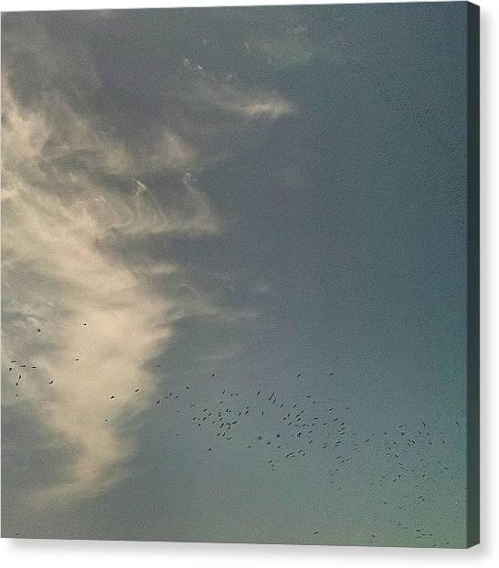Storks Canvas Print - #cigüeñas #migracion #storks #tarifa by Jose Rambaud