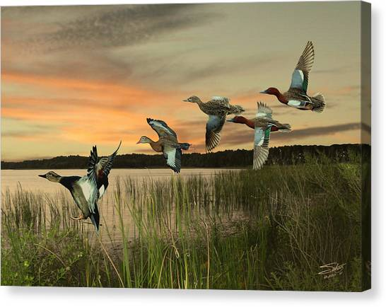 Cinnamon Teal Ducks At Dusk Canvas Print