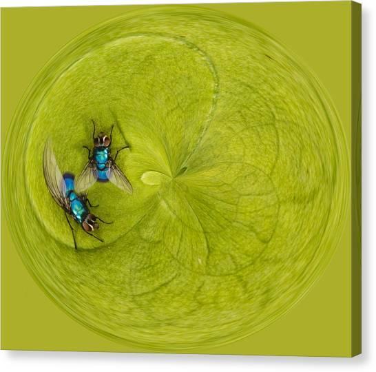 Creative Manipulation Canvas Print - Circle Of Flies by Jean Noren