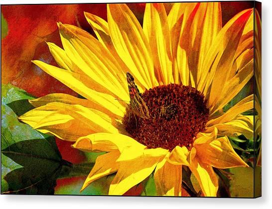 Circle Of Life............. Canvas Print