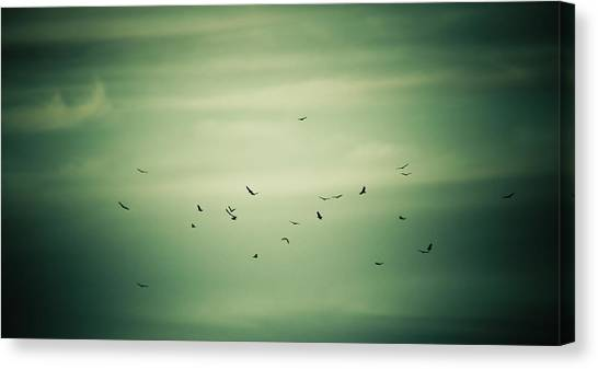 Vultures Canvas Print - Circling by Shane Holsclaw