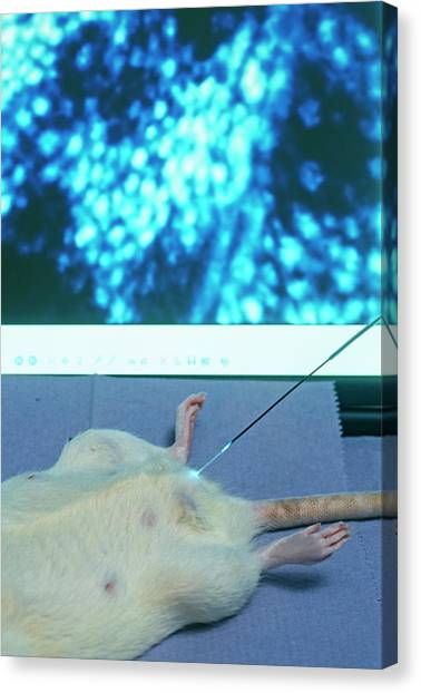 Unconscious Canvas Print - Circulation Research by Philippe Psaila/science Photo Library