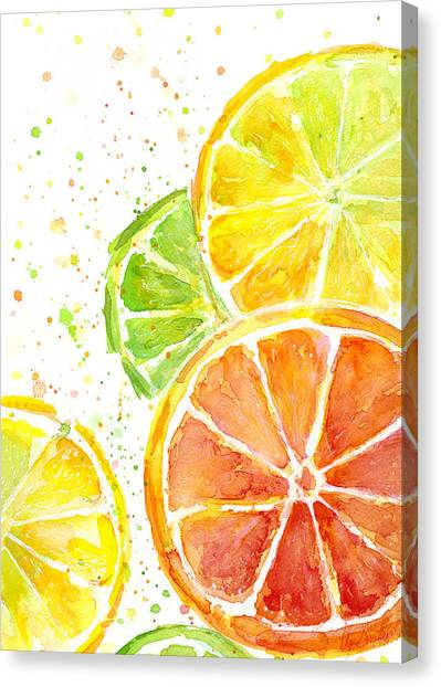 Limes Canvas Print - Citrus Fruit Watercolor by Olga Shvartsur