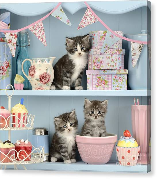 Bunting Canvas Print - Baking Shelf Kittens by Greg Cuddiford