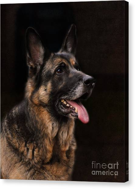 German Shepherd Canvas Print - Classic German Shepherd by Jai Johnson