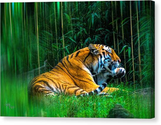 Clean Claws Canvas Print