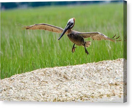 Clear For Landing Canvas Print