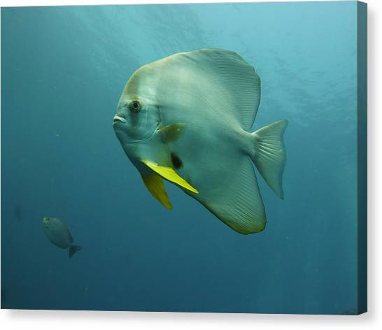Scuba Diving Canvas Print - Clear Waters by Andrew Scott