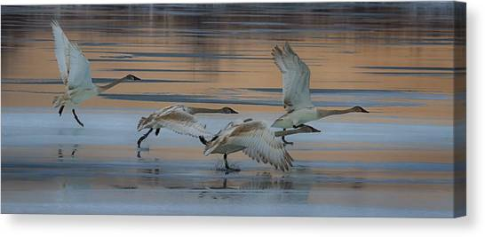 Cleared For Take Off Canvas Print