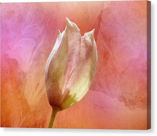 Clematis Opening Canvas Print