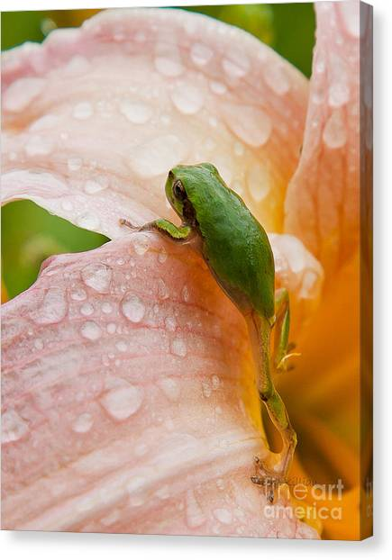 Climbing Up Canvas Print