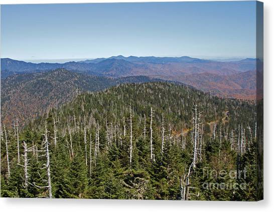 Clingmans Dome Autumn Canvas Print