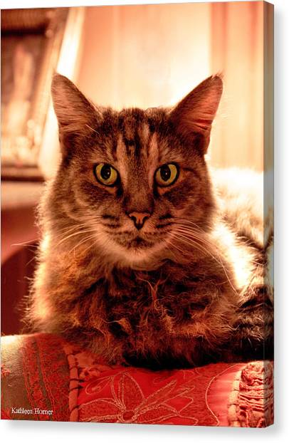 Manx Cats Canvas Print - Clippy by Kathleen Horner