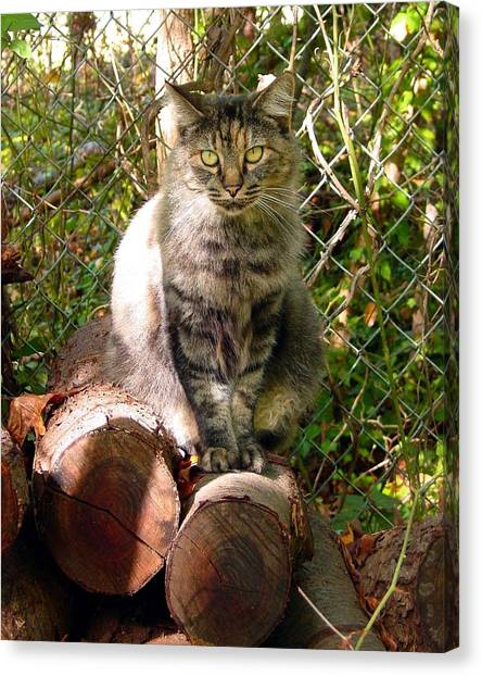 Manx Cat Canvas Print - Clippy On The Wood Pile by Kathleen Horner
