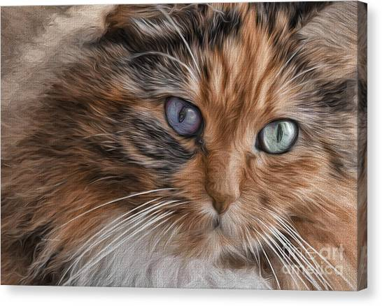 Cloe Kitty Canvas Print