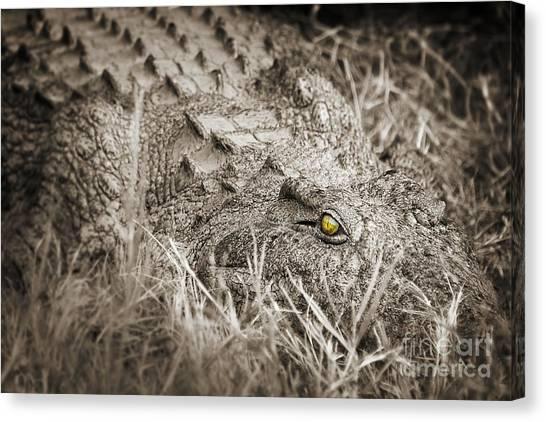 Crocodiles Canvas Print - Close Crocodile  by Delphimages Photo Creations