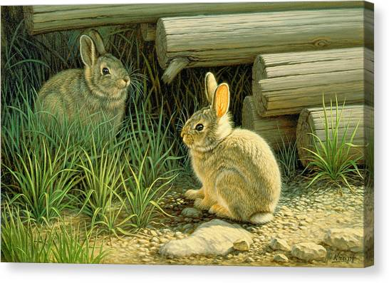 Rabbits Canvas Print - Close To Cover by Paul Krapf