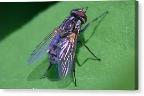 Close Up Fly Canvas Print