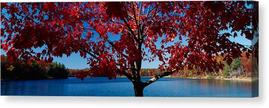Walden Pond Canvas Print - Close-up Of A Tree, Walden Pond by Panoramic Images