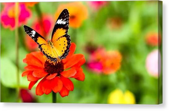 Close-up Of Butterfly On Orange Flower Canvas Print by Mongkol Nitirojsakul / Eyeem