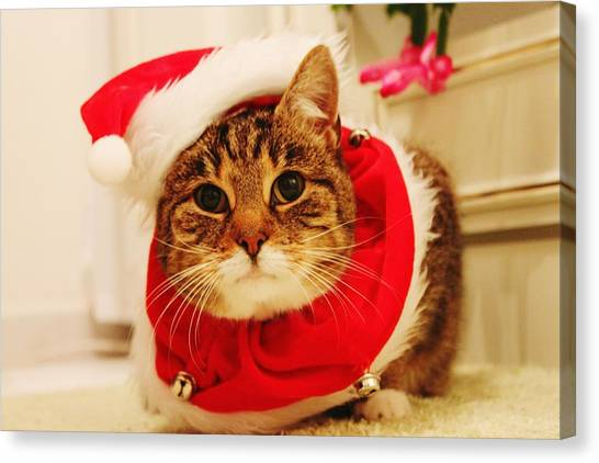 Close-up Of Christmas Cat Canvas Print by Gregor Bleul / Eyeem