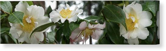 In Bloom Canvas Print - Close-up Of Details Of Camellia Flowers by Panoramic Images