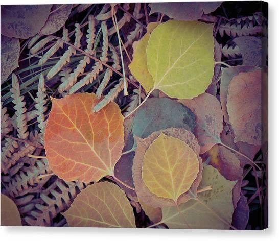 Close-up Of Fall Foliage, Colorado Canvas Print