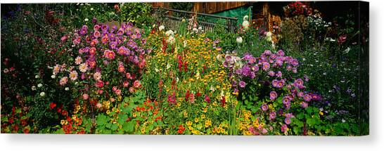 Nasturtiums Canvas Print - Close-up Of Flowers, Muren, Switzerland by Panoramic Images