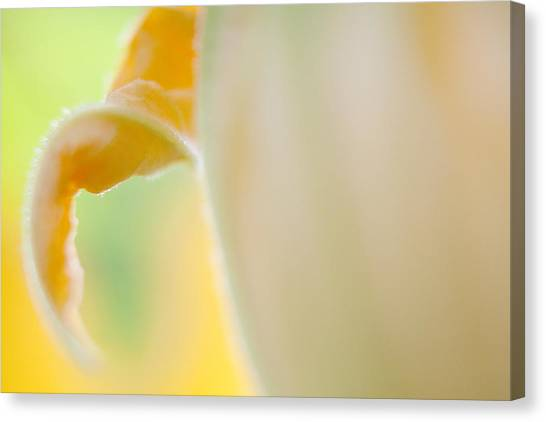 Close-up Of Yellow Plant Canvas Print by Paulien Tabak / EyeEm