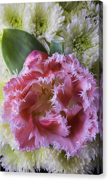 Pom-pom Canvas Print - Close Up Pink Tulip by Garry Gay
