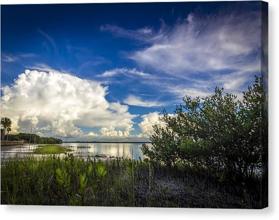 Tampa Bay Rays Canvas Print - Close Your Eyes And See by Marvin Spates