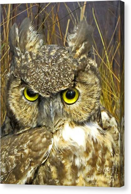 Closeup Of A Great Horned Owl Canvas Print