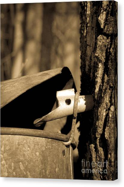 Gathered Canvas Print - Closeup Of A Maple Tap by Edward Fielding