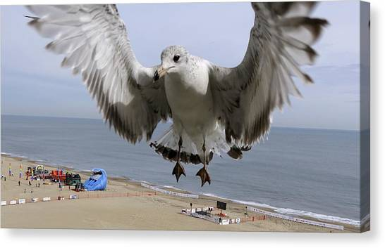 Closeup Of Hovering Seagull Canvas Print