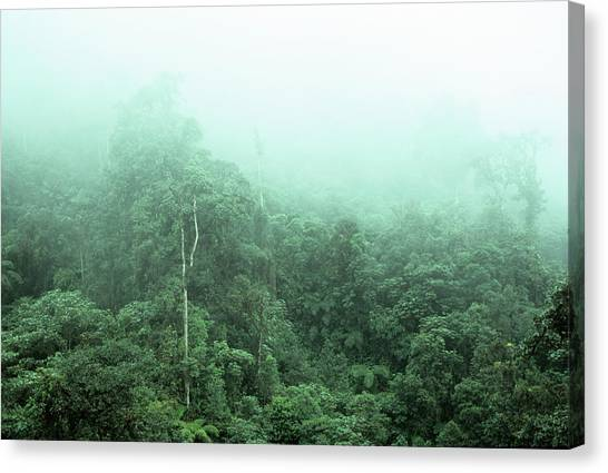 Cloud Forests Canvas Print - Cloud Forest by Dr Morley Read/science Photo Library