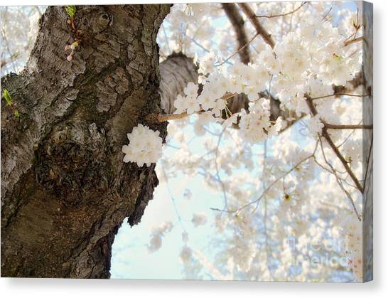 Cloud Of Petals Canvas Print