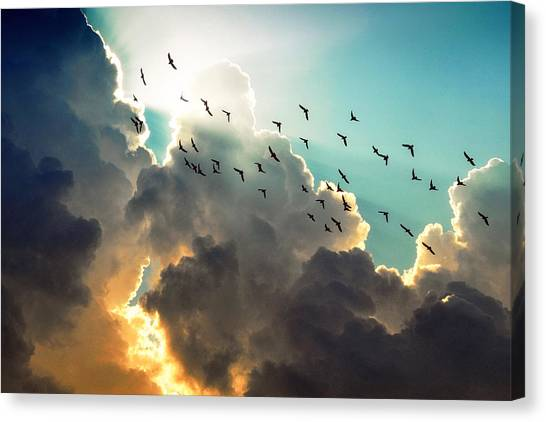 Clouds And Birds Canvas Print by Dorothy Walker