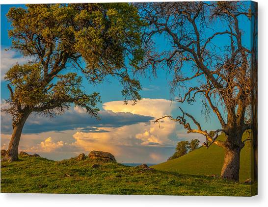 Contra Canvas Print - Clouds Between Trees by Marc Crumpler