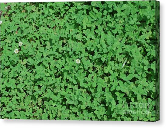 Clover Canvas Print by Gayle Melges