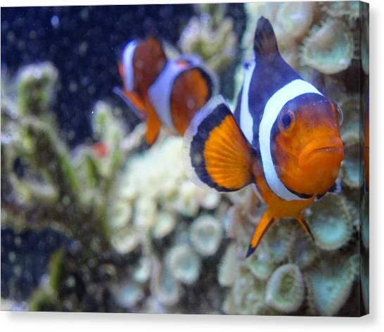 Clown Fish Couple Canvas Print
