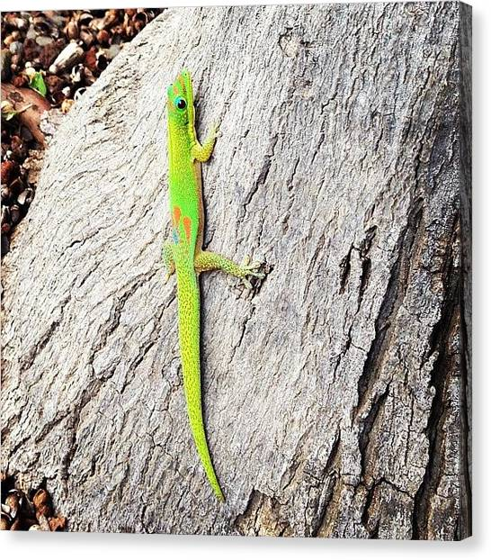 Iguanas Canvas Print - Clyde by Grant Steven