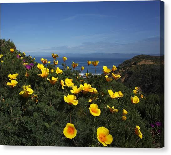 Coastal California Poppies Canvas Print