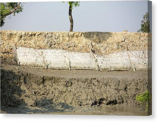 Ganges Canvas Print - Coastal Flood Defences In The Sunderbans by Ashley Cooper