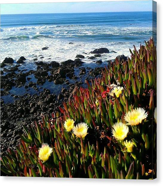Beach Cliffs Canvas Print - Coastal Flowers by CML Brown