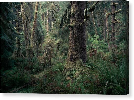 Coastal Forest 3 Canvas Print
