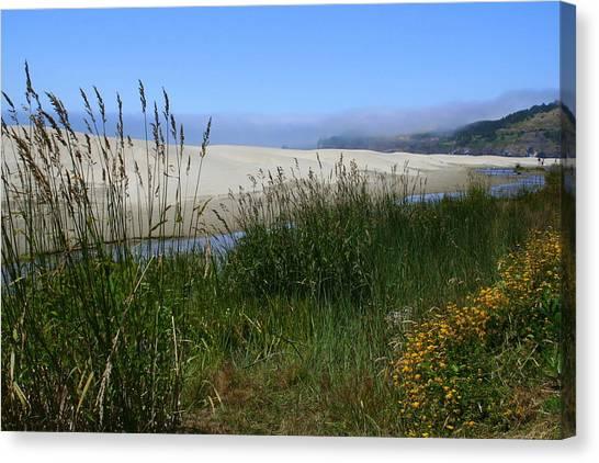 Coastal Grasslands Canvas Print